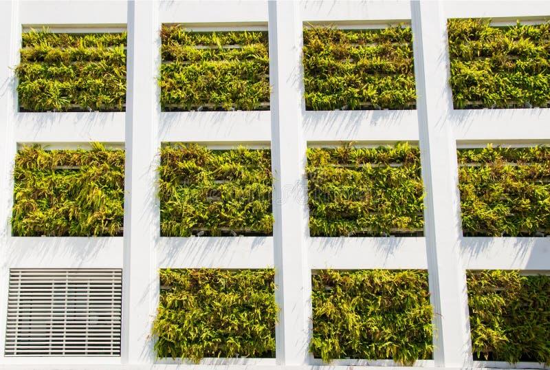 Architettura di Eco Costruzione con le piante idroponiche invece delle finestre Concetto dell'ambiente di ecologia fotografia stock libera da diritti