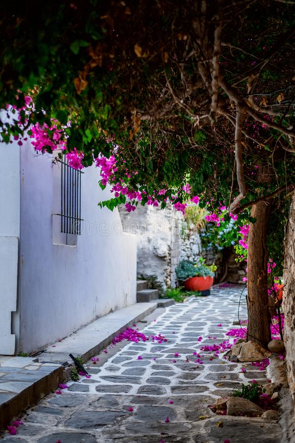 Architettura tradizionale di Cicladi sull'isola di Paros, villaggio di Naoussa La Grecia immagine stock