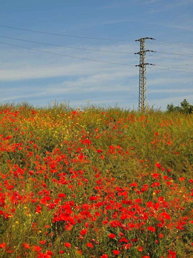 Archiviert mit vielen Mohnblumenblumen in den Blüten Sehr heißer Tag, Anlagen haben, zu verwelken Blätter lizenzfreies stockbild