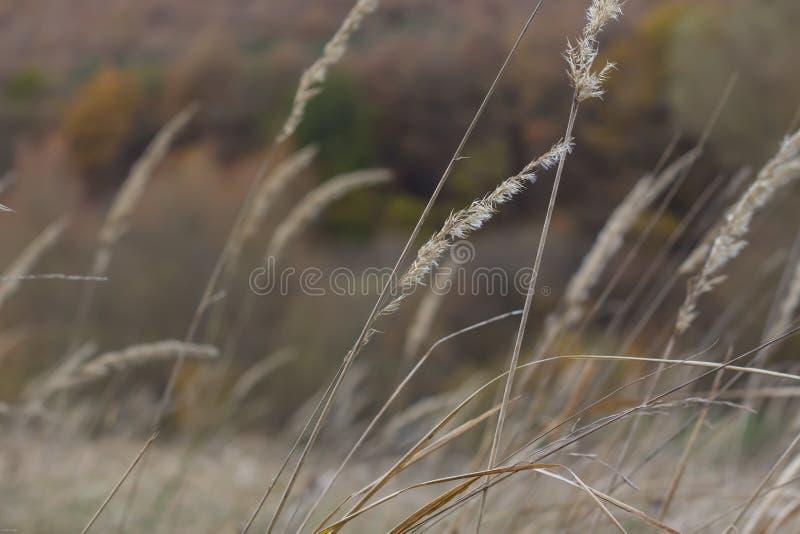 Archiviert vom Herbst stockfotos