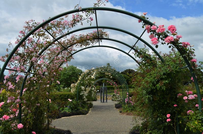 Archway in garden decorated with pink roses royalty free stock photo
