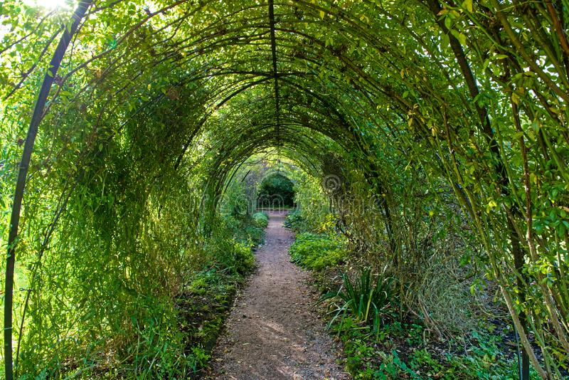 Archway of Trees. In a formal garden setting a 100 foot long archway of evergreen trees createan impressive entrance stock photography