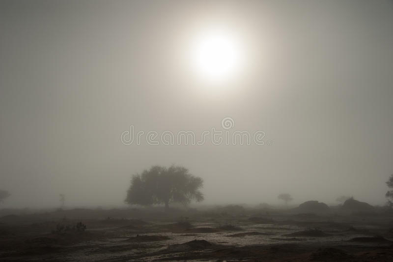 Arco-íris branco indescritível, Vlei inoperante, parque nacional de Sossusvlei, Namíbia imagem de stock royalty free