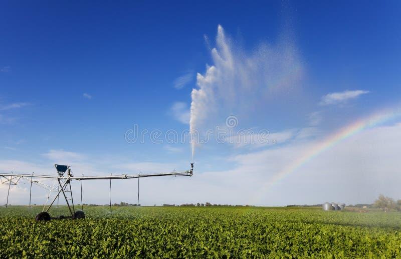 Arco-íris da irrigação imagem de stock