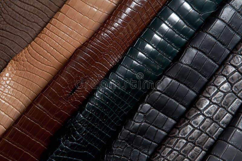 Arco-íris do couro fotos de stock