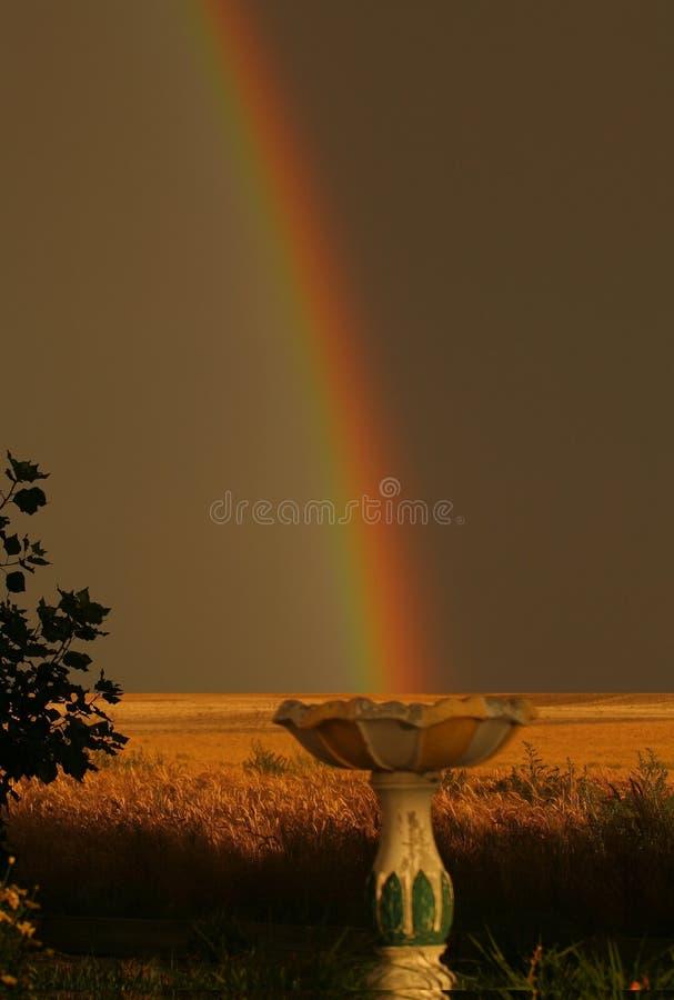 Arco-íris na banheira de passarinho foto de stock