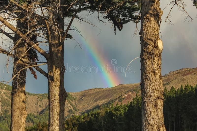 Arco-íris sobre a floresta, o fenômeno da natureza, rochas e árvores, cores brilhantes no arco-íris, chuva e céu nebuloso fotografia de stock royalty free