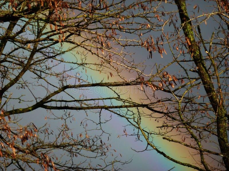 Arco-íris visto através das árvores foto de stock royalty free