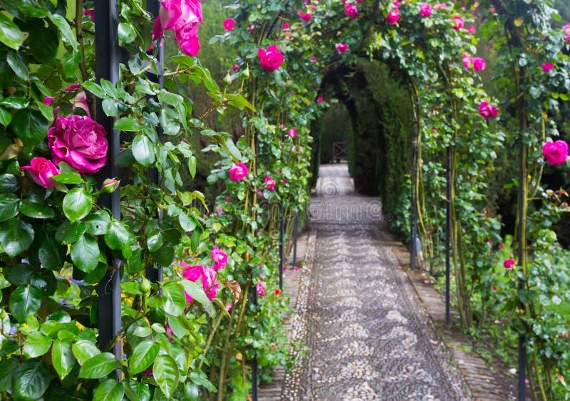 Arco con le rose al giardino di Generalife granada immagini stock libere da diritti