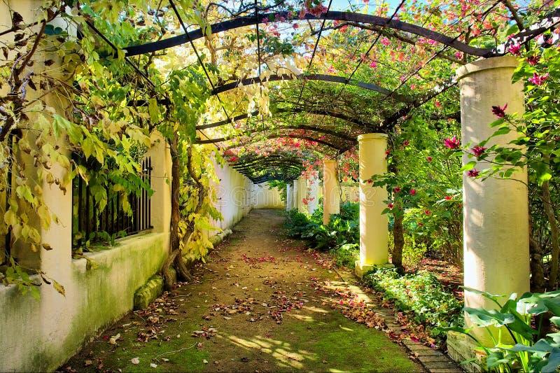 Arco d'autunno coperto dalla vite fotografia stock libera da diritti