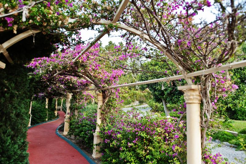 Arco de flores roxas da buganvília em Turquia fotografia de stock royalty free