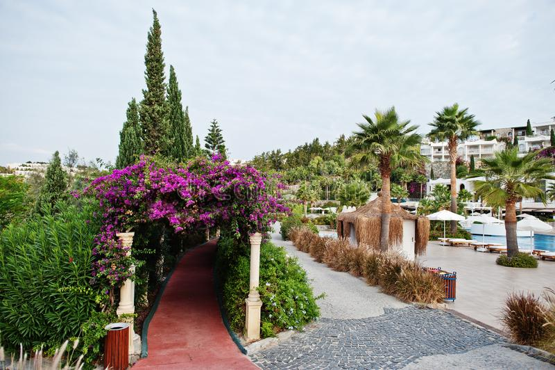 Arco de flores roxas da buganvília no recurso de Turquia foto de stock