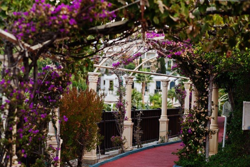 Arco de flores roxas da buganvília no recurso de Turquia fotos de stock royalty free
