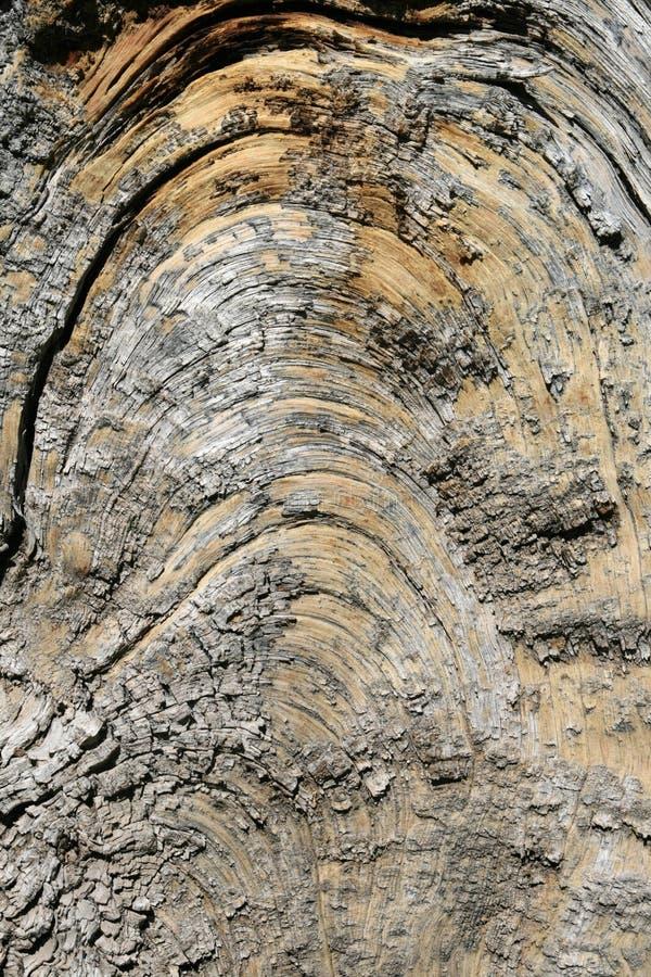Arco de madera del grano imágenes de archivo libres de regalías