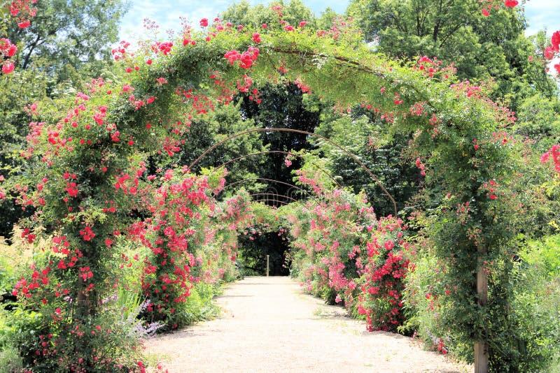 Arco de Rosa no jardim foto de stock royalty free