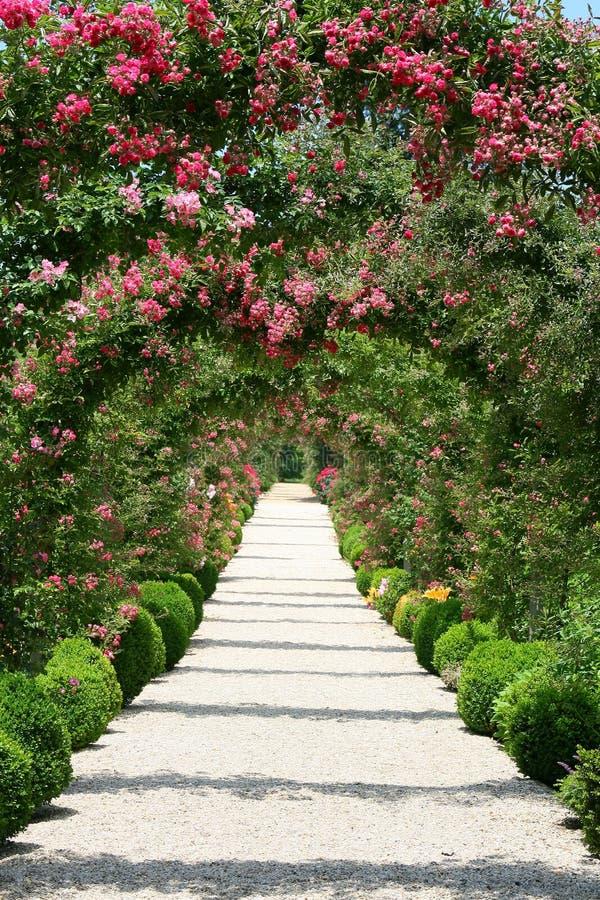 Arco de Rosa no jardim foto de stock