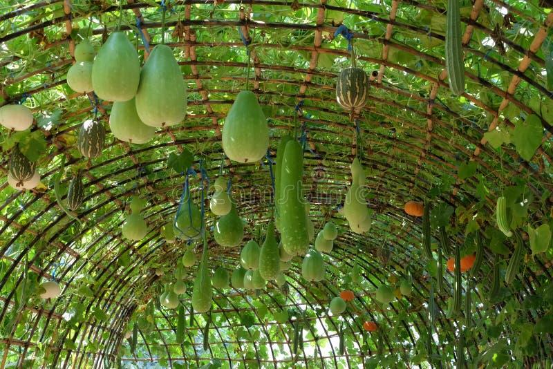 Arco de verduras, arco del melón, tuétano, lufa foto de archivo