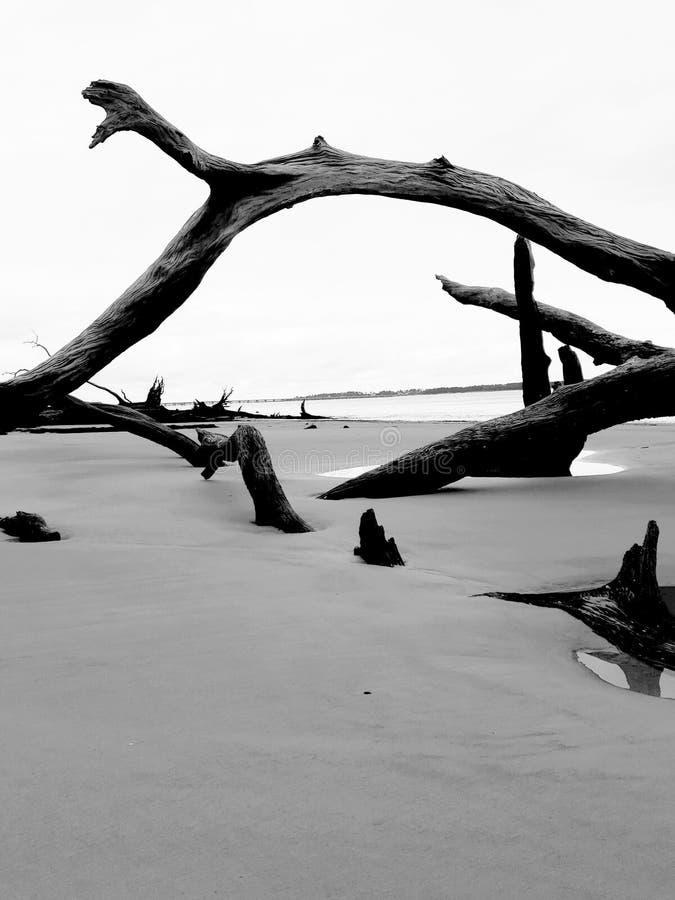 Arco del legname galleggiante fotografia stock