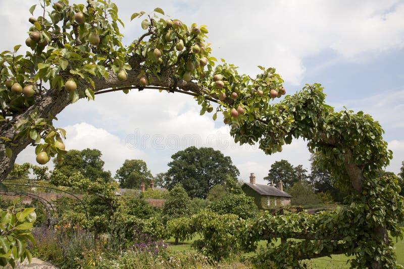 Arco della pera nel giardino del cottage immagine stock