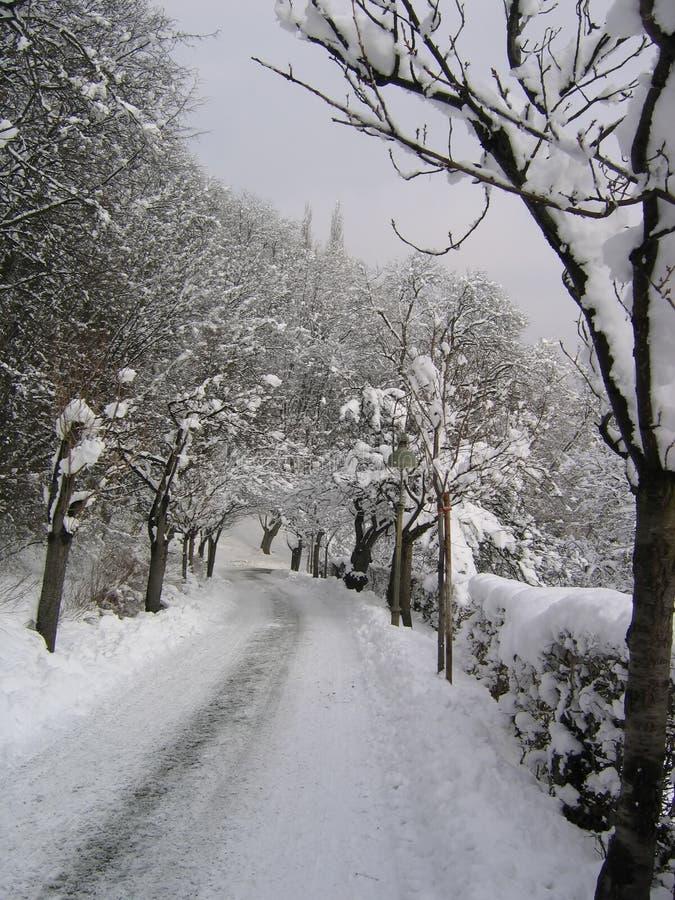Arco do inverno fotos de stock