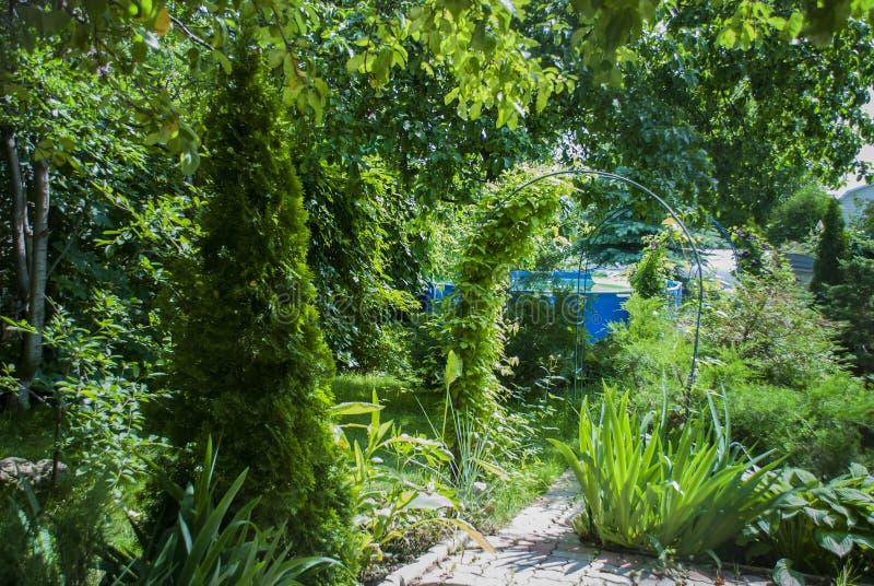Arco do jardim com videiras fotografia de stock royalty free