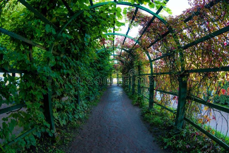 Arco do túnel do caramanchão ou da flor coberto de vegetação com as plantas verdes em um jardim romântico do verão fotos de stock