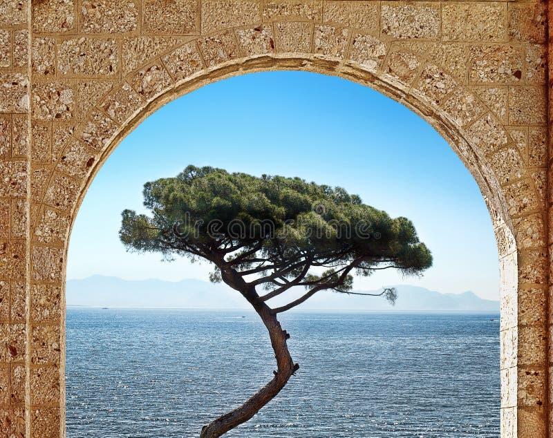 Arco e árvore de pedra fotografia de stock royalty free
