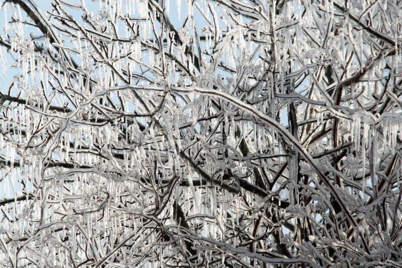 Arco ghiacciato fotografia stock libera da diritti