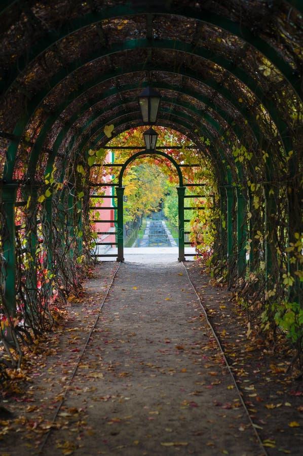 Arco interno con i lianes e le lanterne autunnali di tempo fotografia stock libera da diritti
