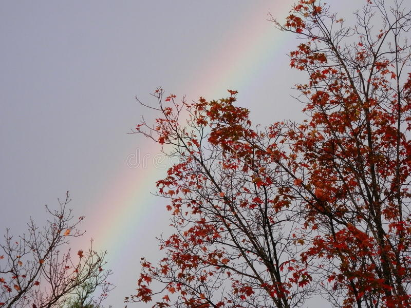 Arco iris débil sobre árboles del otoño imagen de archivo