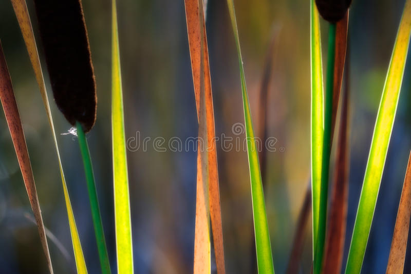 Arco iris de la caída imagenes de archivo