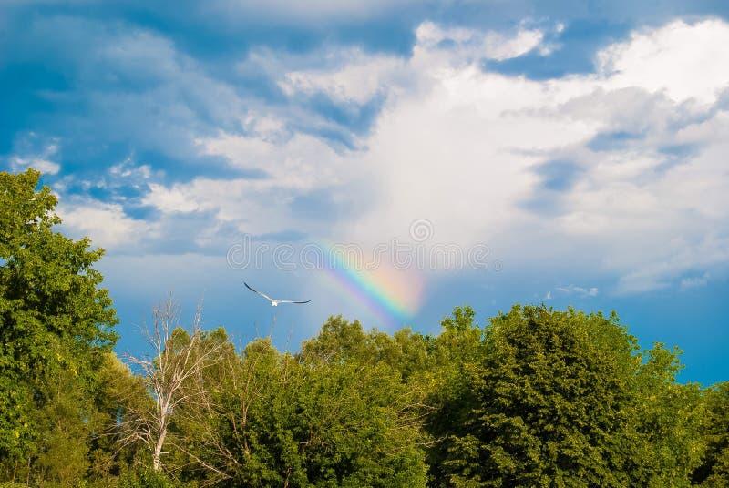 Arco iris del vuelo imagen de archivo