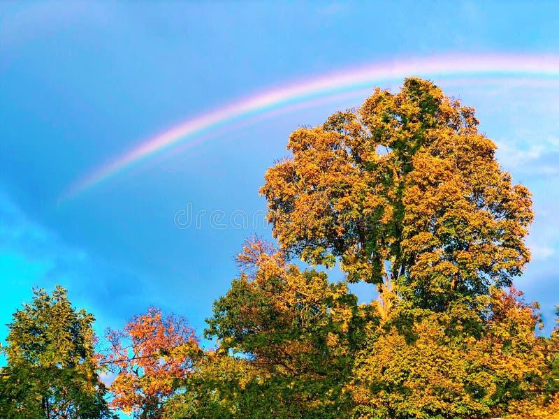 Arco iris doble colorido con los árboles de arce y el cielo azul fotografía de archivo