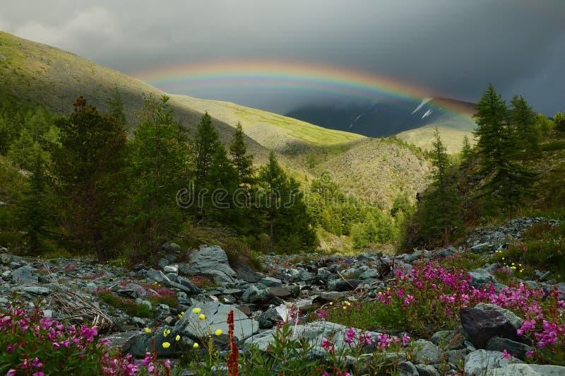 Arco iris en el bosque fotografía de archivo