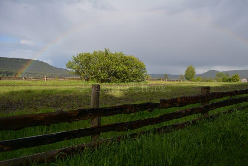 Arco iris en el cielo sobre el bosque imágenes de archivo libres de regalías
