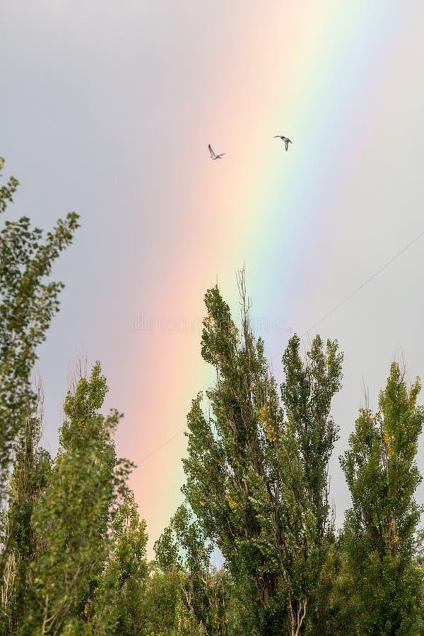 Arco iris en la ciudad sobre los árboles fotografía de archivo libre de regalías