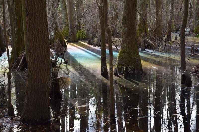Arco iris en pantano fotografía de archivo libre de regalías