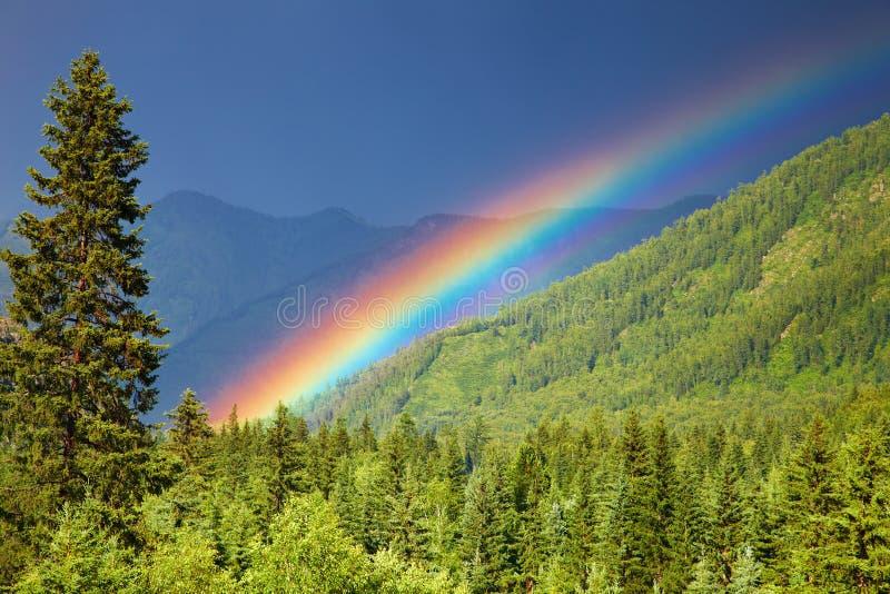 Arco iris sobre bosque foto de archivo