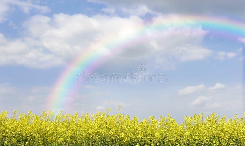 Arco iris sobre campo con las flores amarillas fotos de archivo