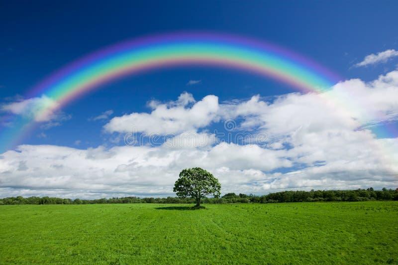 Arco iris sobre campo verde foto de archivo libre de regalías