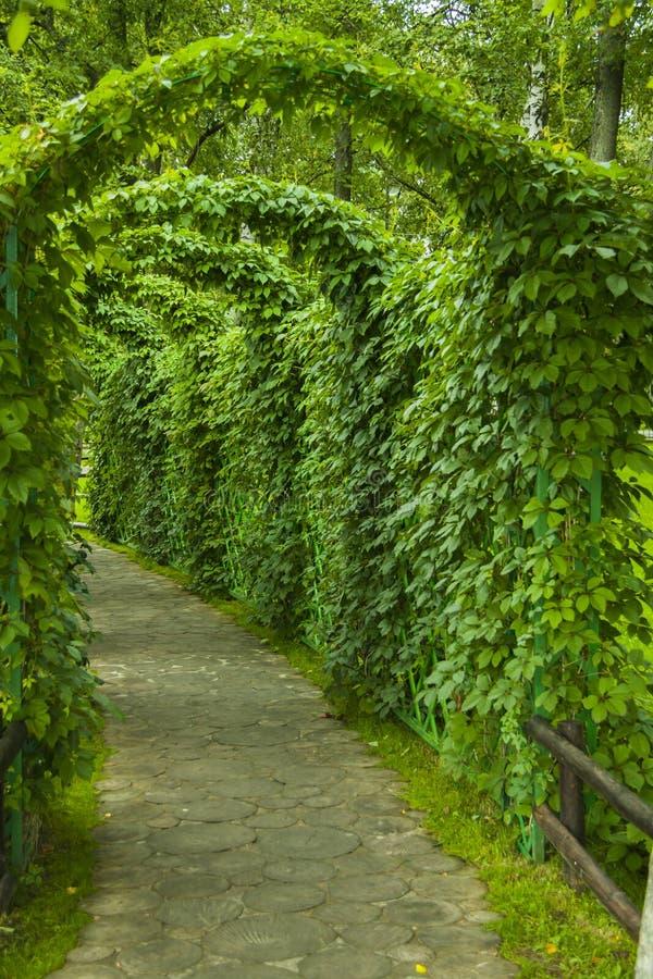 Arco No Parque Imagem de Stock