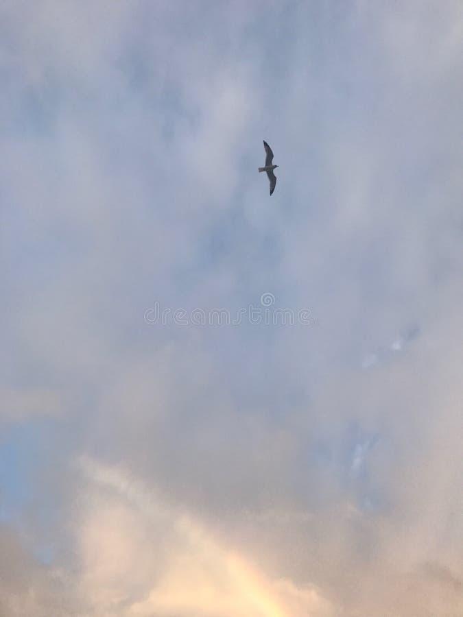 Arcobaleno con l'uccello immagini stock libere da diritti