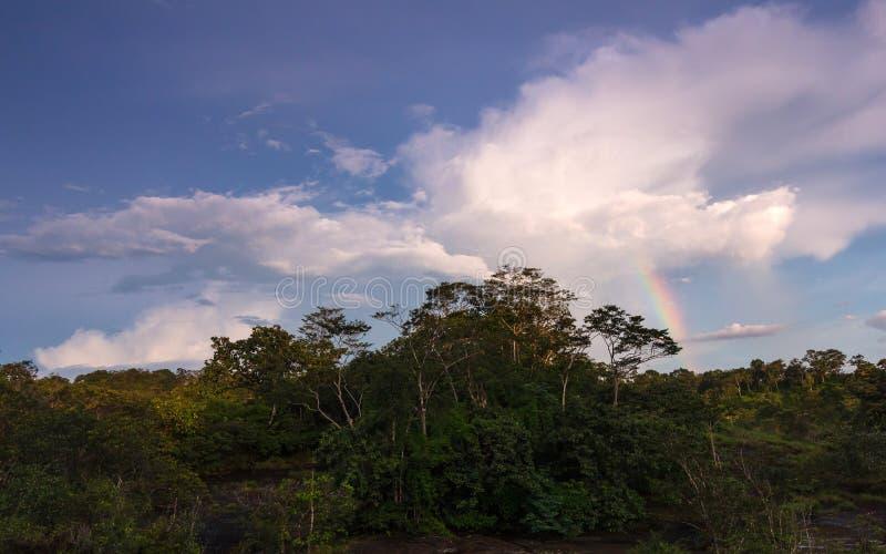 Arcobaleno della foresta immagine stock