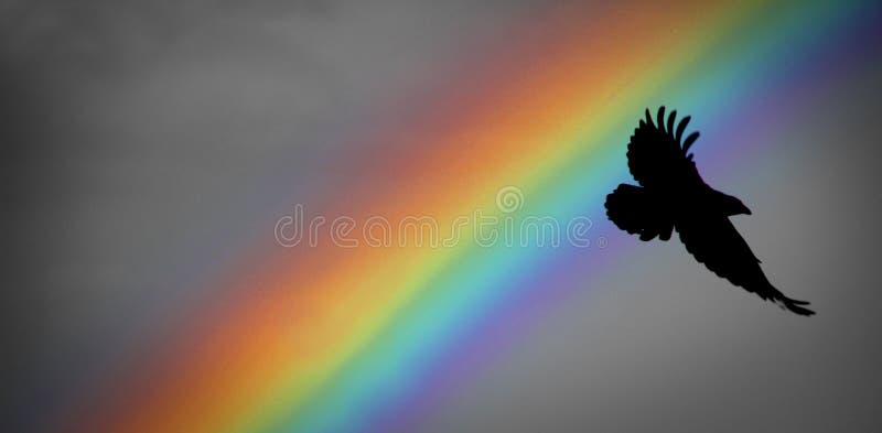 Arcobaleno e corvo di Noè fotografia stock