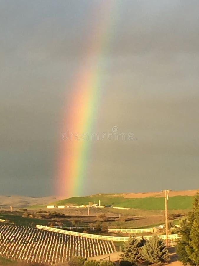 Arcobaleno parziale con erba verde e la giovane vigna - Paso Robles, California fotografie stock libere da diritti