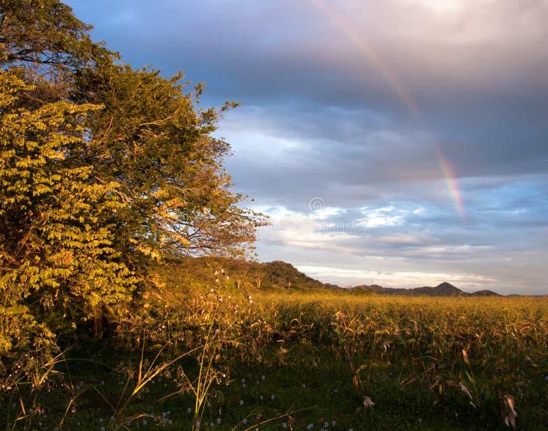 Arcobaleno sopra Palo Verde National Park in Costa Rica fotografia stock libera da diritti