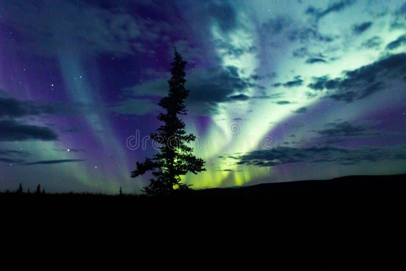 Arcoss för nordliga ljus de svärtade himlarna av ett alaskabo liv som stirrar upp på stjärnorna Nordliga ljus över de svarta gran arkivbilder