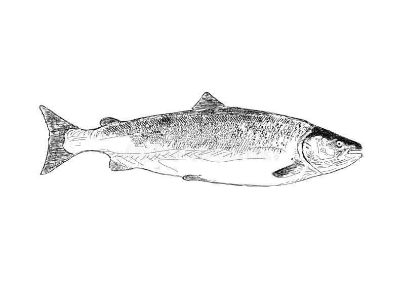 Arctc, Russland, weißes Meer Hand gezeichnete Abbildung stock abbildung