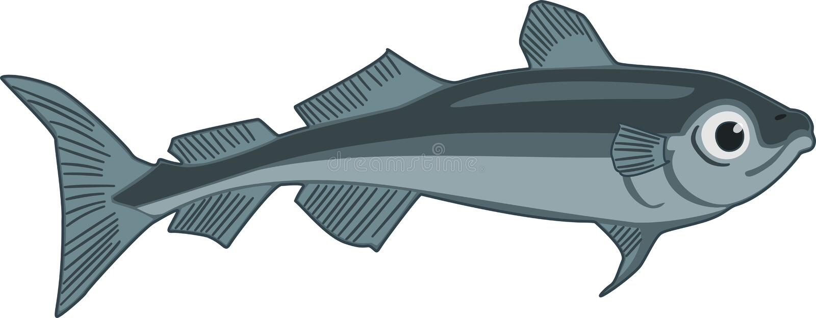 Arctic Cod. Illustration the arctic cod fish vector illustration