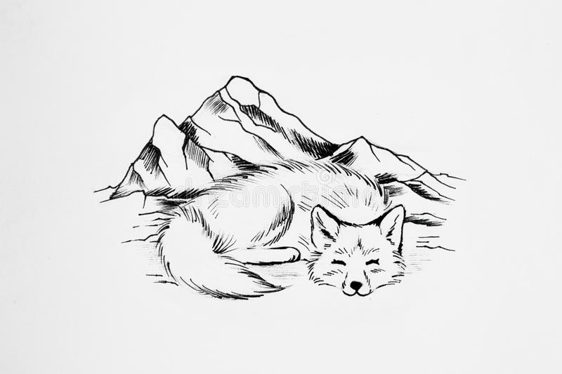 Line Drawing Fox : Arctic fox sleeps on a background of high mountains. stock